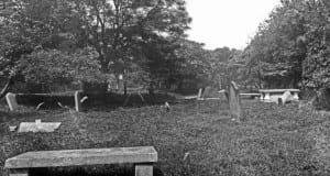 The Cabbage Garden burial ground in Dublin